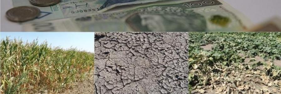 Straty w uprawach rolnych spowodowane przez suszę
